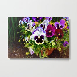 Purple Pansy Garden Galore! Metal Print
