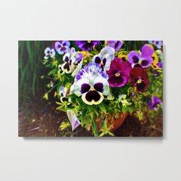 Purple Pansy Garden Galore! Metal Print