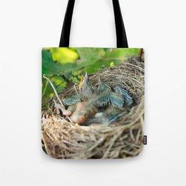 Azores blackbird nest Tote Bag