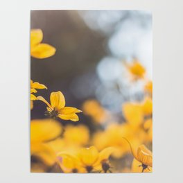 Dreaming in yellow Poster