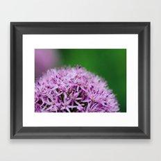 Alliums Framed Art Print