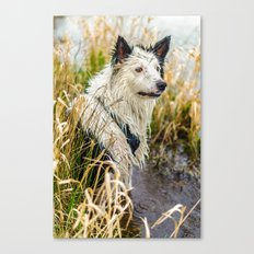 Welsh Boarder Collie Canvas Print