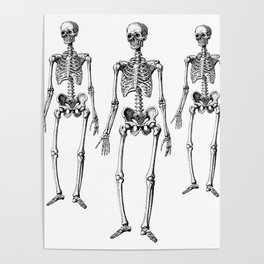 Three Skeletons Poster