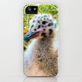 California Gull Chick iPhone Case