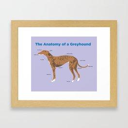 The Anatomy of a Greyhound- Red Brindle Framed Art Print