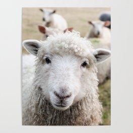 Sheep Friend Poster
