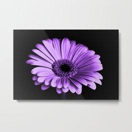 Purple Chrysanthemum Big Flower Flowers Floral Violet Metal Print
