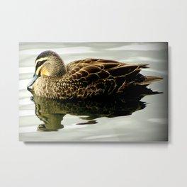 Pacific Black Duck Metal Print