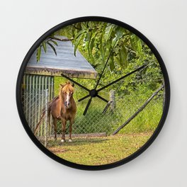 Portrait of a miniature horse mare Wall Clock