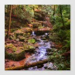 Lovely redwood forest scene at Big Basin State Park. Canvas Print