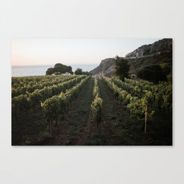 tuscany vineyard Canvas Print