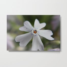 White Flower Close Up Metal Print