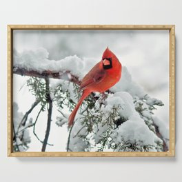Cardinal on Snowy Branch #2 Serving Tray