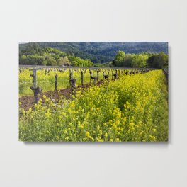 Yellow Mustard Blooming Between Rows of old Grapevines Metal Print