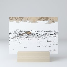 Ring-necked Pheasant Mini Art Print