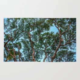 monkey pod tree Rug