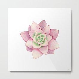 Pink succulent Metal Print