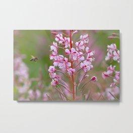 Fireweed 3990 Metal Print