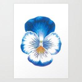 Pansy Art Print