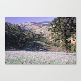 Lavenders and mountains Canvas Print