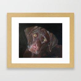 Inquisitive Chocolate Labrador Framed Art Print