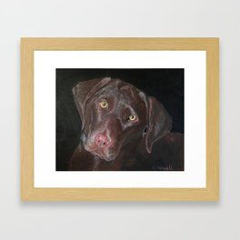 Inquisitive Chocolate Labrador Framed Art Print
