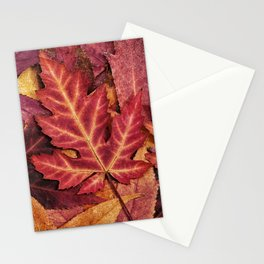 Colorful Autumn Maple Leaf Indian Summer Red Stationery Cards