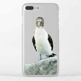 blue-footed booby Clear iPhone Case