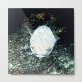 Snorkeling, The Blowfish Metal Print