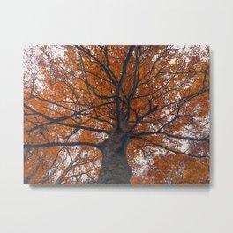 Fall tree, Autumn landscape Metal Print