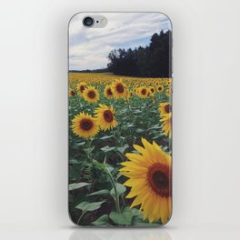 Sunflower Field iPhone Skin
