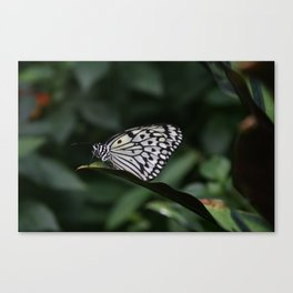 Butterfly House 1 Canvas Print