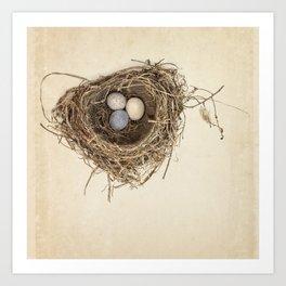 Bird Nest with Stone Eggs on Vintage Paper Art Print