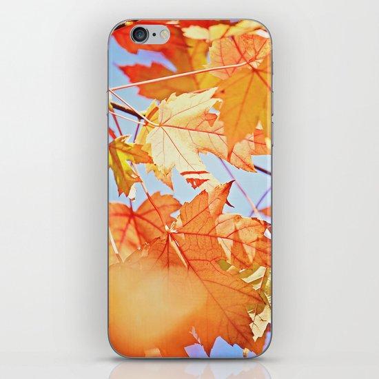 Fall Color iPhone & iPod Skin