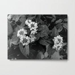 Sweet and Innocent Metal Print