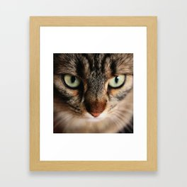 cat square o4 Framed Art Print
