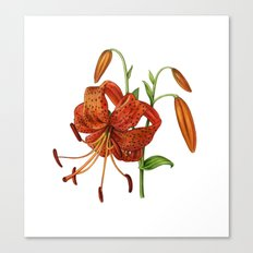 Lilium Tigrinum Canvas Print