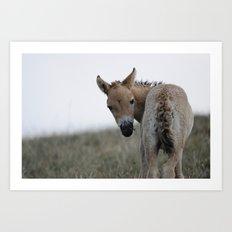 Baby Przewalski's Horse Art Print