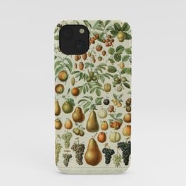 Fruit Identification Chart iPhone Case