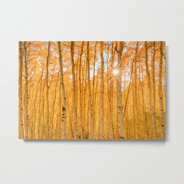 ASPENS OF AUTUMN PHOTO - COLORADO FALL IMAGE - SUN & TREES NATURE PICTURE - LANDSCAPE PHOTOGRAPHY Metal Print