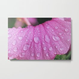Rain Drops on Flower - Plant Photography Metal Print