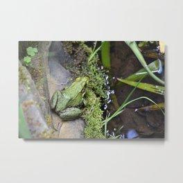 Frog, Not Toad Metal Print