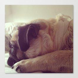 sleepy pug Canvas Print