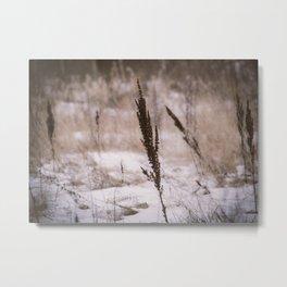 Plants and snow Metal Print