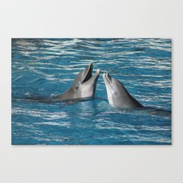 Couple of dolphins playing Canvas Print