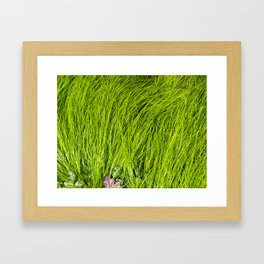 Verdure Framed Art Print