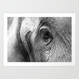 Gentle eyes Art Print