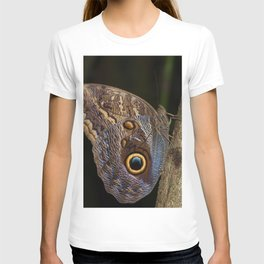 Owl butterfly in Costa Rica - Tropical moth T-shirt