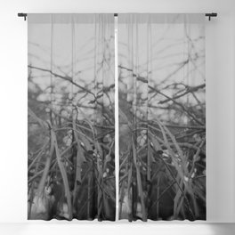 absent Blackout Curtain