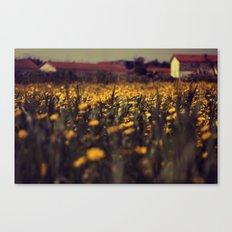 a sea of daisies Canvas Print